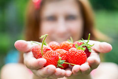Woman hands with strawberry Stock Photography