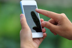 Woman hands taking photo with smartphone Stock Images