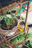 Woman hands watering seedlings in urban garden Royalty Free Stock Photography