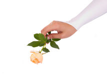 Woman hands in wedding glove with rose Stock Image