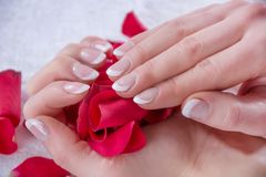 Woman Hands With French Manicure Style And Modern Nails Polish Holding Red Rose Petals In Studio Royalty Free Stock Photos