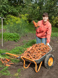 Woman with harvested carrot Royalty Free Stock Photos