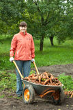 Woman with harvested carrots Stock Photography