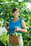 Woman with harvested cucumber Stock Photo