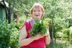 Woman with harvested dill and  parsley Royalty Free Stock Photos