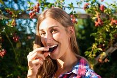 Woman harvesting berries in garden Royalty Free Stock Image