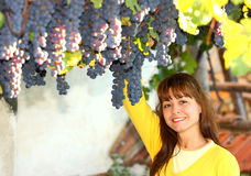 Woman harvesting grapes Royalty Free Stock Photos