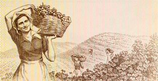 Woman harvesting grapes. On 3 leke 1976 banknote from Albania royalty free stock images