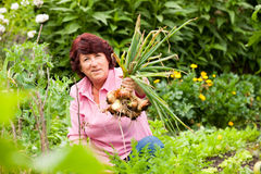 Woman harvesting onions in garden Stock Photo