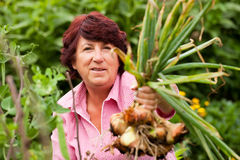Woman harvesting onions in garden Royalty Free Stock Photography