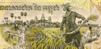 Woman Harvesting Rice. On 2000 Rieles 2007 Banknote from Cambodia Royalty Free Stock Photos