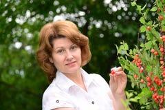 Woman harvests cherries in a  garden Stock Photo
