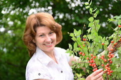 Woman harvests cherries in a  garden Stock Photography
