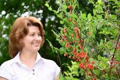 Woman harvests cherries in a  garden Stock Photos