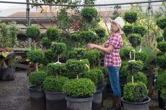 Woman in hat choosing plants in tree nursery Stock Photo