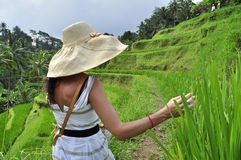 Woman with hat in rice field in Bali, luxury  relaxation Stock Images