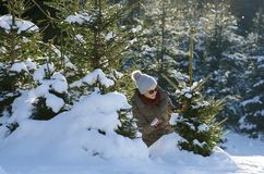 Woman have fun with snow curious of a small fir tree into forest Royalty Free Stock Photos