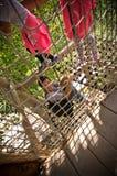 Woman having fun at Zoo Safari, Dvur Kralove Stock Photography