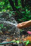Woman heaving fun with hosepipe splashing water. In the jungle with jungle in the background Stock Photography
