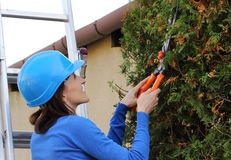 Woman in helmet on ladder uses gardening tool to trim bushes Royalty Free Stock Images