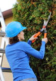 Woman in helmet on ladder uses gardening tool to trim bushes Stock Photography