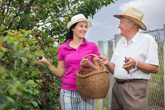 Woman helping an older man in the orchard, to pick blackberries Stock Photo