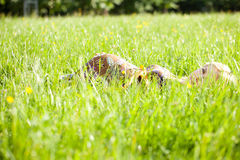 Woman And Her Belly In The Grass Stock Photography