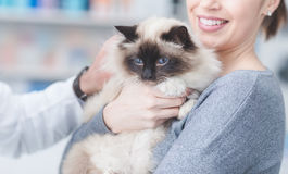 A woman with her cat at the veterinary clinic Stock Photography