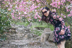 Woman and her cherry blossoms Stock Photos