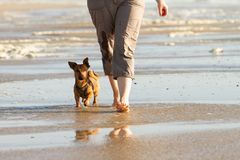 Woman and her cute little dog walking to heel at the beach royalty free stock photography