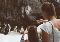 Woman and her daughter looking at penguins in the zoo. Royalty Free Stock Photo