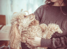 Woman with her dog at home. Stock Images