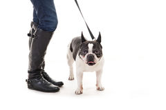 Woman with her dog on leash Stock Photography