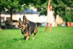 Woman With Her Dog In The Park Stock Photography