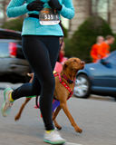 Woman and her dog during the race Stock Photos
