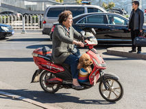 Woman and her dog on a scooter Stock Image