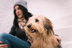 Woman and her dog Stock Images