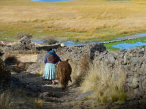 Woman and her Donkey. Woman in traditional outfits and her donkey walking next to Titicaca lake Royalty Free Stock Images