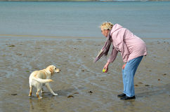 Woman with her golden labrador Stock Images