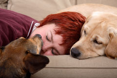 Woman and her pet dogs. A redhead woman sleeping on a sofa together with her two pet dogs royalty free stock image