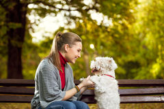 Woman with her puppy in park. Young woman playing with her puppy in autumn park Stock Photography