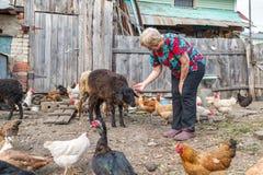 Woman at her sheep farm, animals Stock Photo