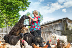 Woman at her sheep farm, animals and nature Stock Photography