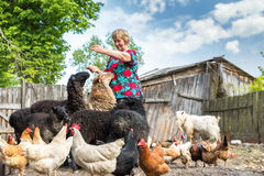 Woman at her sheep farm, animals and nature Royalty Free Stock Photography