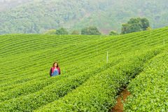 Woman in herb tea plant or Camellia sinensis field Royalty Free Stock Photos