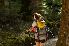 Woman hiker with backpack walking in native beech forest Royalty Free Stock Image