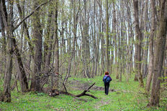 Woman hiker in the forest Royalty Free Stock Photo