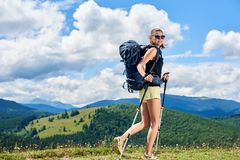 Woman hiker hiking on grassy hill, wearing backpack, using trekking sticks in the mountains. Attractive smiling woman tourist hiking mountain trail, walking on royalty free stock photo