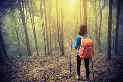 Woman hiker hiking in spring foggy forest trail. Young woman hiker hiking in spring foggy forest trail stock photos