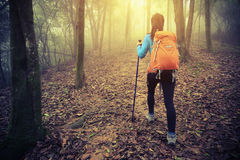 Woman hiker hiking in spring foggy forest trail Royalty Free Stock Photography